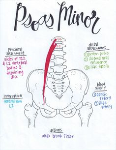 How to massage Muscle Anatomy, Body Anatomy, Psoas Iliaque, Examen Clinique, Psoas Release, Cabinet Medical, Muscular System, Human Anatomy And Physiology, Medical Anatomy