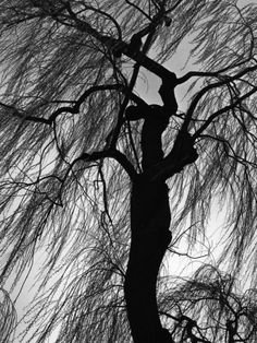 more black and white…brett weston, keith carter, louise dahl wolfe Oregon, Edward Weston, Weeping Willow, Personalized Photo Gifts, Photo Center, Photo B, Ansel Adams, Cool Posters, Plein Air