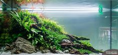 "simonsaquascapeblog: ""Favourites: tank by Lukasz Krzywosz From Hannover live scaping. Photo credit by Fenja Hardel """