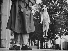 Jumping dog by Elliot Erwitt. Paris, France 1989.