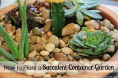DIY: How to Plant a Succulent Garden Video Tutorial + a $100 Home Depot Giveaway! - Time 2 Save Workshops