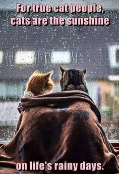 Absolute truth💜🌞💕 cat couple, cat quotes, cool cats, i love Funny Animals With Captions, Funny Cats And Dogs, Cats And Kittens, Kittens Cutest, Funny Animal Memes, Funny Cat Videos, Funny Animal Pictures, Crazy Cat Lady, Crazy Cats