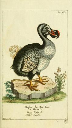 Bd 2 plates (1780) - Gemeinnüzzige Naturgeschichte des Thierreichs : - Biodiversity Heritage Library
