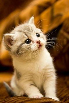 cat ぴこんっ