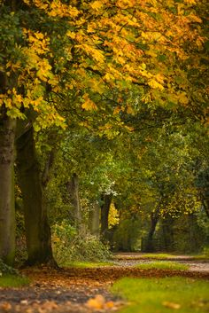 The Wirral Way in early Autumn Beautiful World, Beautiful Places, Beautiful Scenery, October Country, Easy Canvas Art, Magic Forest, Autumn Scenery, Fall Is Here, Early Fall