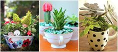 8 Charming Teacup Gardens You'll Want in Every Room of Your Housewomansday