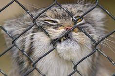 Let me outta here! #pallascat www.boneandyarn.com