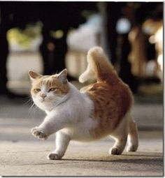 left, right, left ....chubby fat cat marching on the road