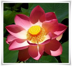 Lotus bloom~♥~to Japan with love~♥~