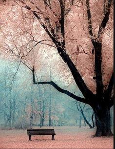 Fallen flowers beautiful scenery, beautiful world, beautiful places, simply beautiful, peaceful places Beautiful World, Beautiful Places, Simply Beautiful, Beautiful Park, Beautiful Scenery, Peaceful Places, Absolutely Stunning, Beautiful Forest, Beautiful Dream