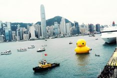 rubber duck hong kong | Huge Rubber Duck Heading to Pittsburgh! in Boring Pittsburgh