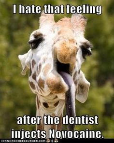 This is how I expect to look after I get my wisdom teeth out lol
