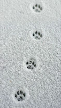 Small paw prints in the snow. the # Paw prints You are in the right place about claros linea Here we offer you the most beautiful pictures about the claros palavra you are looking for. When you examine the Small paw prints in the snow. the # Paw prints … Christmas Aesthetic Wallpaper, Christmas Wallpaper, Christmas Background, Cat Photography, Winter Photography, Travel Photography, Crazy Cat Lady, Crazy Cats, My Crazy