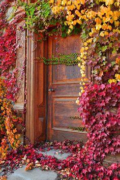 Leaf covered door. Secret garden door