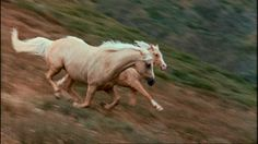 """write-this-shit: """" thepiesendure: """"Thowra and Golden :) The Silver Brumby """" I need to rewatch this movie """" Pretty Horses, Beautiful Horses, Beautiful Things, Palomino, Palamino Horse, Horse Movies, Names Of Artists, Black Stallion, White Horses"""