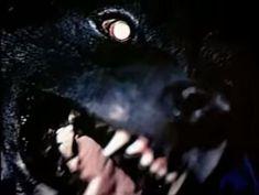 Art Noir, Nicole Dollanganger, Scary Dogs, Dog Teeth, Looks Cool, Pitbull, Cerberus, Werewolves, Superbad