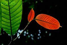 Mejora de productos a través de la tropicalización