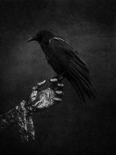 Beautiful lie the dead. Maître corbeau...