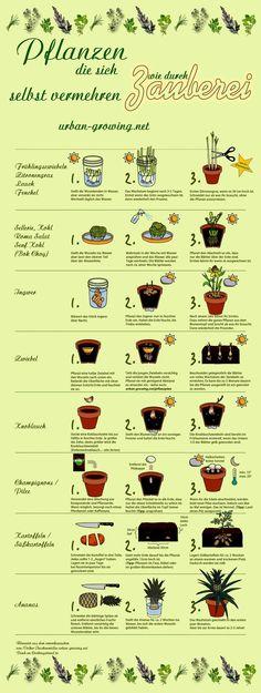 Pflanzenvermehrung ist manchmal ganz einfach. Hier habe ich für euch eine wunderbare Schautafel mit einer Reihe von Pflanzen erstellt. It`s magic!