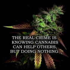 is one of the best cannabis consultant's services provider in Canada. If you are looking for professional cannabis consultant's then feel free to contact us. Weed Quotes, Marijuana Facts, Weed Facts, Endocannabinoid System, Medical Cannabis, Cannabis Oil, Smoking Weed, Chronic Pain, Helping Others