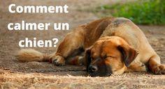 Calmer un chien