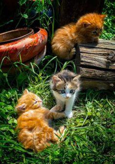 Three little kittens…