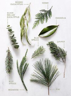 Greenery staples such as pine magnolia eucalyptus and juniper make for stunning holiday greenery arrangements. Greenery staples such as pine magnolia eucalyptus and juniper make for stunning holiday greenery arrangements. Winter Wedding Decorations, Tree Decorations, Christmas Decorations, Winter Weddings, Winter Wedding Flowers, Winter Wedding Ideas, Diy Decoration, Christmas Greenery, Christmas Diy