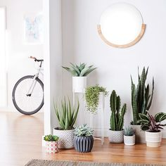 Amazon Home (@amazonhome) • Instagram photos and videos Amazon Home, Planter Pots, Photo And Video, House, Instagram, Videos, Photos, Pictures, Haus