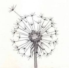 Cool Art Drawings Easy Ideas Ideas For 2019 Easy Drawings For Beginners, Easy Drawings For Kids, Cool Art Drawings, Pencil Art Drawings, Art Sketches, Simple Drawings, Flower Drawings, Art Du Croquis, Drawing Eyes