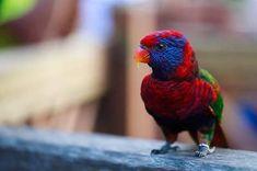34 Stunning Pictures Of Exotic Birds Rare Birds, Exotic Birds, Most Beautiful Animals, Beautiful Birds, Small Birds, Pet Birds, Albino Peacock, Pink Cockatoo, Kinds Of Birds