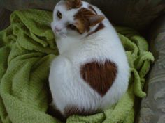 My Cat Showing His Love… Actually.