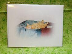 Belly Up Orange Tabby Cat Photograph Greeting by ReprievesCorner, $1.00