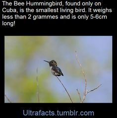 I don't think I have ever seen a hummingbird without its wings flapping! Animals And Pets, Funny Animals, Cute Animals, The More You Know, Did You Know, Beautiful Birds, Animals Beautiful, Interesting Information, Interesting Facts