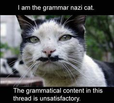 LOLcat: Grammar Nazi Cat