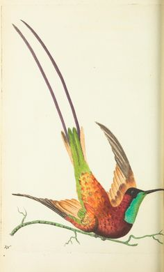 v.13 - The naturalist's miscellany, or Coloured figures of natural objects - Biodiversity Heritage Library