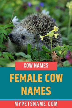 Does your tiny hedgehog rule the household and always has everyone's attention. Why not name her Harriet, which is the female version of Harry, meaning 'one who rules a household'. Check out our list of female Hedgehog names for more ideas. Hedgehog Names, Hedgehog Pet, Shadow The Hedgehog, Female Cow Name, Female Pet Names, Ancient Egyptian Cities, Norse Names, Cow Names, Happy Names