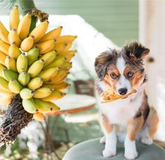 Top 20 Cutest Dog Breeds around the World Cute Dogs Breeds, Dog Breeds, Animals And Pets, Cute Animals, Baby Animals, Pupper Doggo, House Rabbit, Cat Day, Best Dogs
