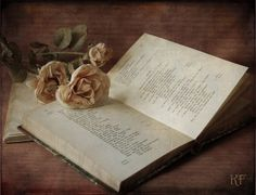 The book and the rose 3