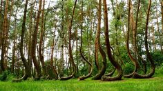15 Unusual and Mysterious Forests 1