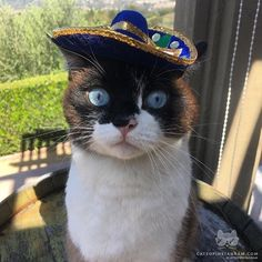 """From @Hankthekitten: """"My mom went to Mexico and all I got back was a sombrero  #wheresthetequila"""" #catsofinstagram #photooftheday #dogs #love"""