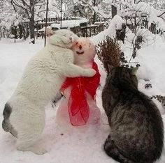 Cat hug for snowman