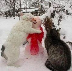 Cat hug for snowman