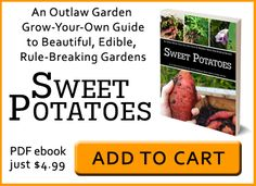 Grow your own sweet potatoes - Outlaw Garden :: Outlaw Garden