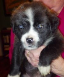 Tanner was ADOPTED!