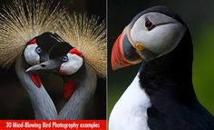 50 Mind-Blowing Bird Photography examples for your inspiration - Part 2. Read full article: http://webneel.com/25-most-beautiful-bird-photography-examples-and-tips-photographers | more http://webneel.com/daily | Follow us www.pinterest.com/webneel