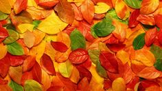 autumn colors - Cerca con Google