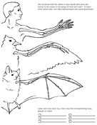 These coloring  pages and worksheets feature different areas of biology as well as fun  facts.