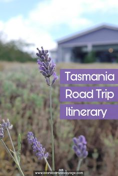 Tips and advice on things to do, see and how to travel in Tasmania. Read More: http://blankcanvasvoyage.com/tasmania/tasmania-road-trip-itinerary/