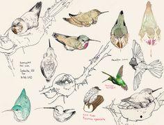 hummingbird selection by mina_milk, via Flickr