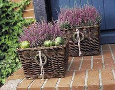 Heide: Smart deco ideas for autumn- Heide: Pfiffige Deko-Ideen für den Herbst Stop with stout heather pots! The filigree autumn bloomers now throw themselves in shell and show their talent as a smart terrace decoration for the season finale. Fall Flowers, Summer Flowers, Diy Garden Bed, Container Gardening Vegetables, Annual Flowers, Deco Floral, Beautiful Flowers Garden, Annual Plants, Container Flowers